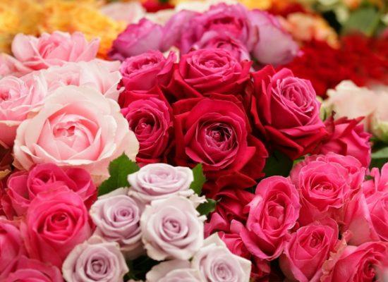 ピンクのバラをプレゼント